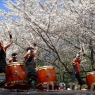sakurasunday20130031