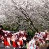 sakurasunday20130063