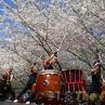 sakurasunday20130064