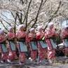sakurasunday20130076