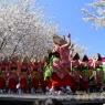 sakurasunday20130099