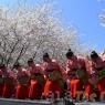 sakurasunday20130109