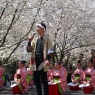 sakurasunday20130119