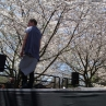 sakurasunday20130152