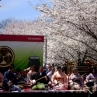 sakurasunday20130178