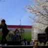 sakurasunday20130187