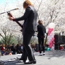 sakurasunday20130198
