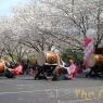 sakurasunday20130212
