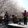 sakurasunday20130220