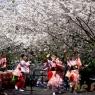 sakurasunday20130060