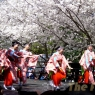 sakurasunday20130062