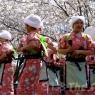 sakurasunday20130073