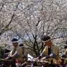 sakurasunday20130083