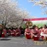 sakurasunday20130121