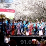 sakurasunday20130003