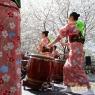 sakurasunday20130044
