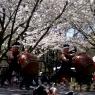sakurasunday20130048