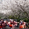 sakurasunday20130061