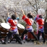 sakurasunday20130215
