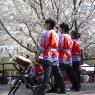 sakurasunday20130216